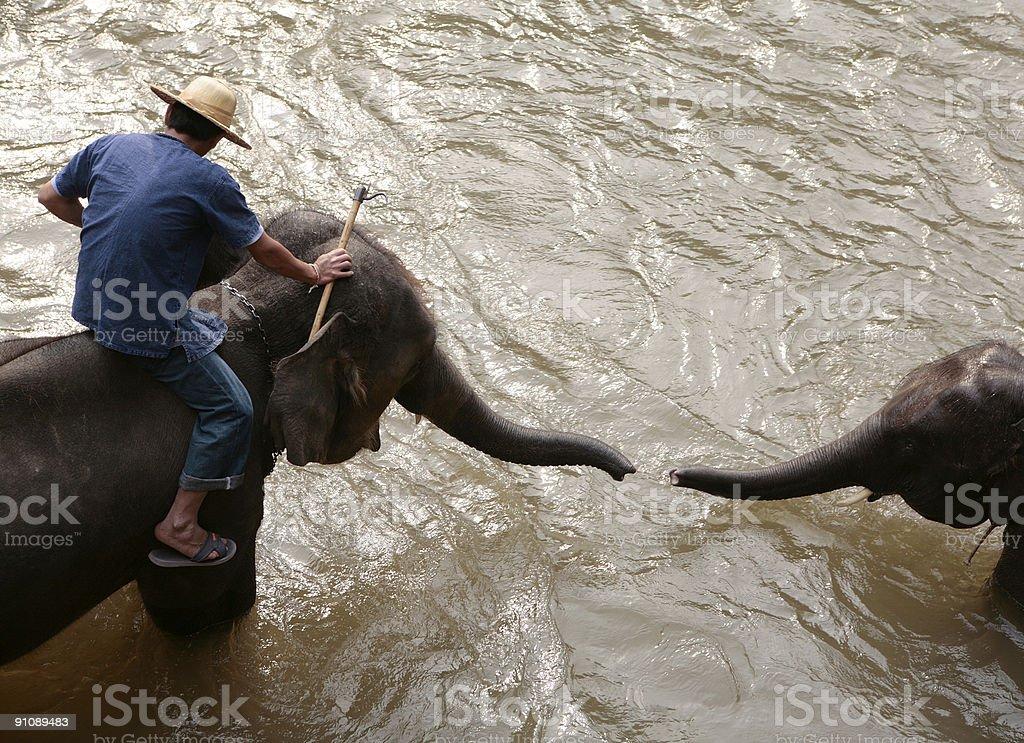 Elephants in Thailand stock photo