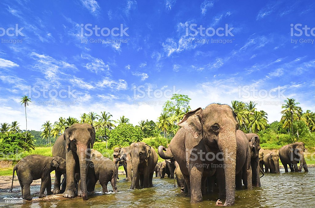 Elephants in the beautiful landscape stock photo