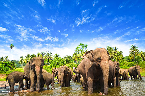 elephants in the beautiful landscape - wildplassen stockfoto's en -beelden