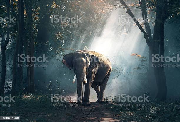 Elephants in the forest picture id588614058?b=1&k=6&m=588614058&s=612x612&h=xwksszcphzkt90bj4hgi4u7enkkjyi5a yqzdblkwko=