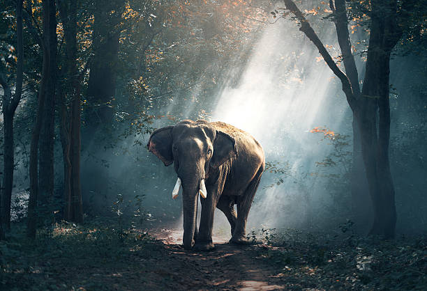 Elephants in the forest stock photo