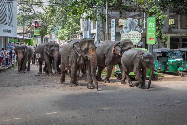Elephants in the streets stock photo
