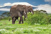 Elefanten im Nationalpark Tsavo Ost und Amboseli in Kenia