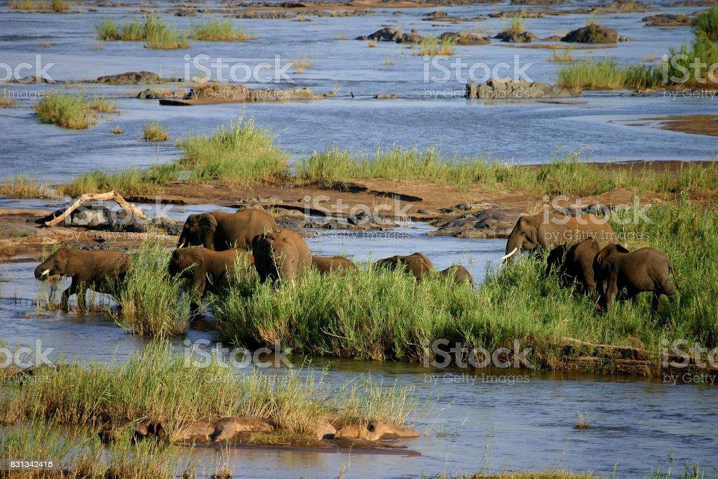 Elephants Kruger National Park stock photo