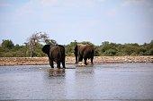 Elephants leaving the waterhole in Namibia, Africa
