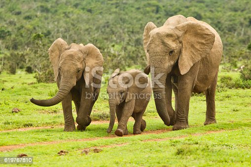 Family of elephants on a path to a water hole