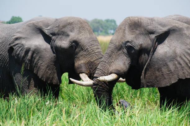 Elefanten – Foto
