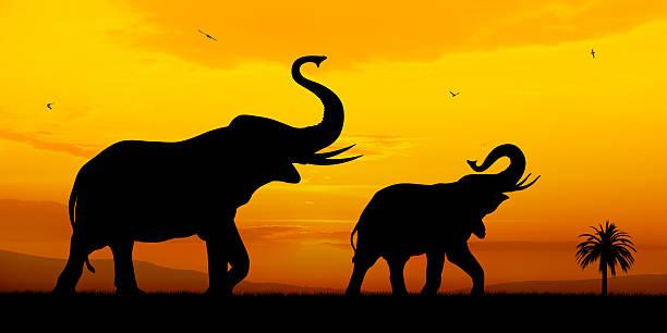 elefanten - elefanten umriss stock-fotos und bilder