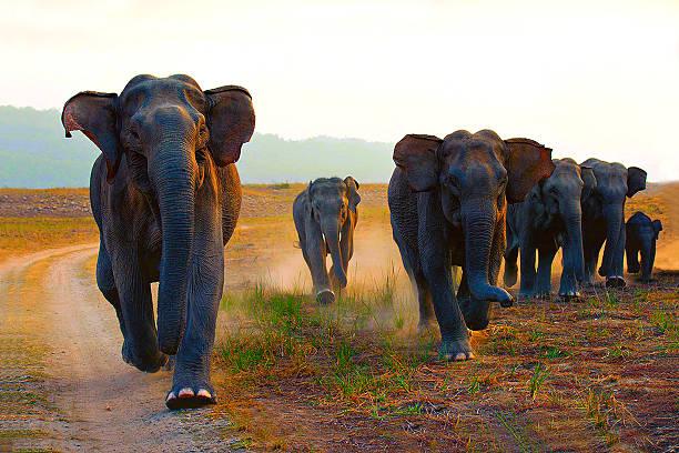 Elephants stock photo