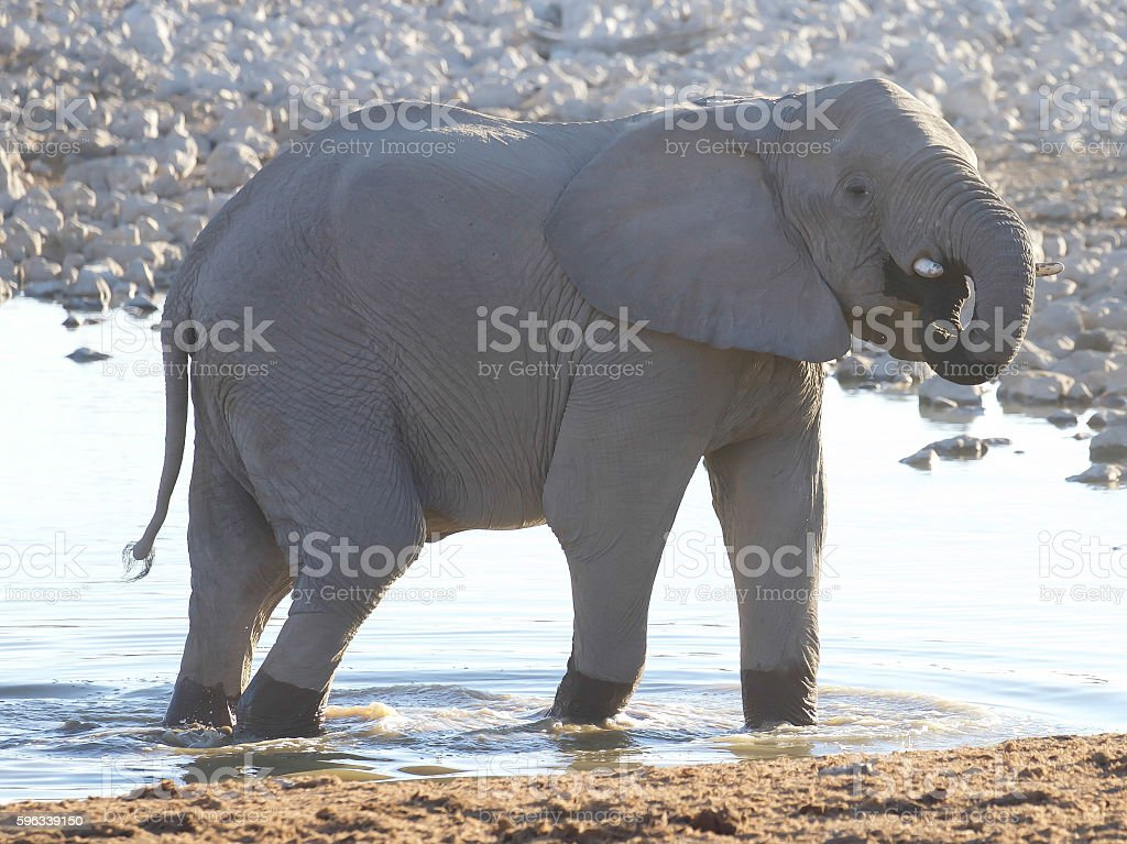 Elefanten  Lizenzfreies stock-foto