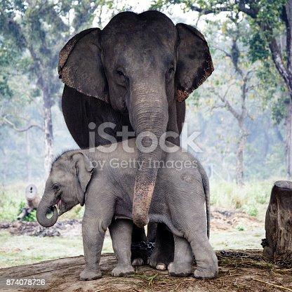 Elephant breeding center Khorsor in the natural park of Chitwan, Nepal