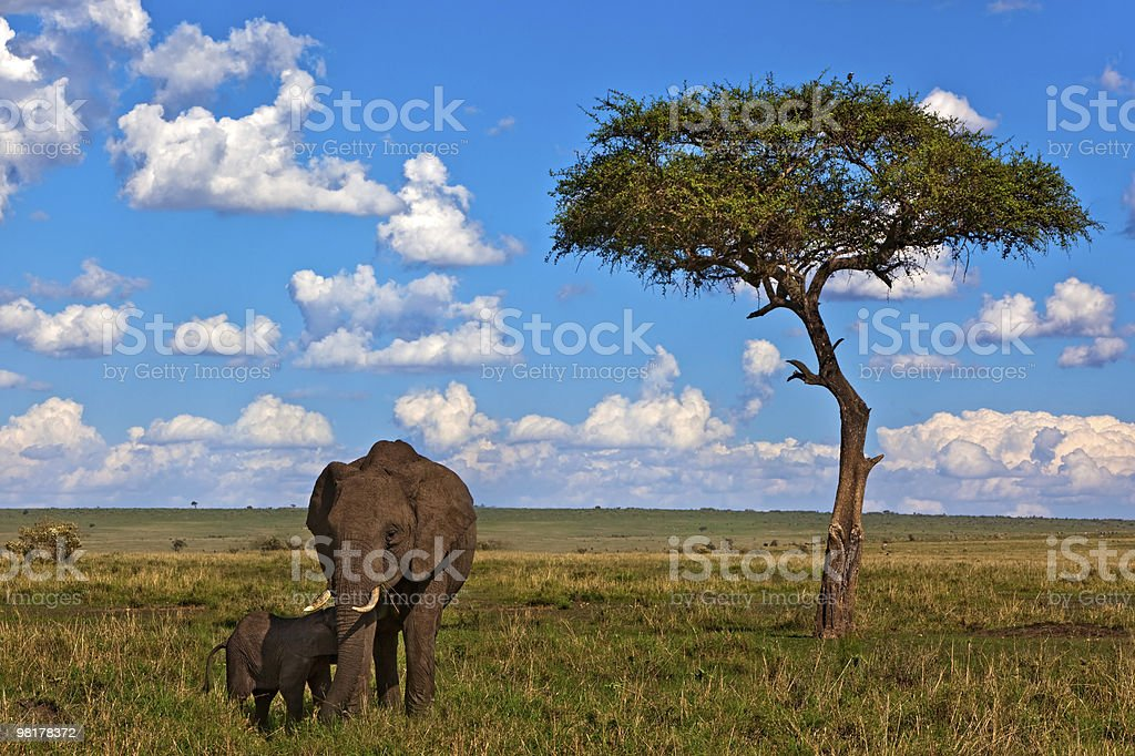Gli Elefanti foto stock royalty-free