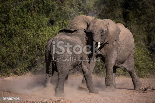 1137909085 istock photo Elephants play fighting 957597496
