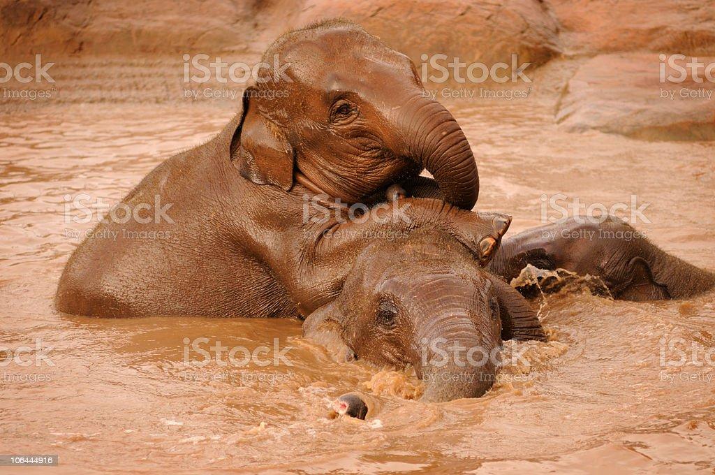 Elephants Playing royalty-free stock photo