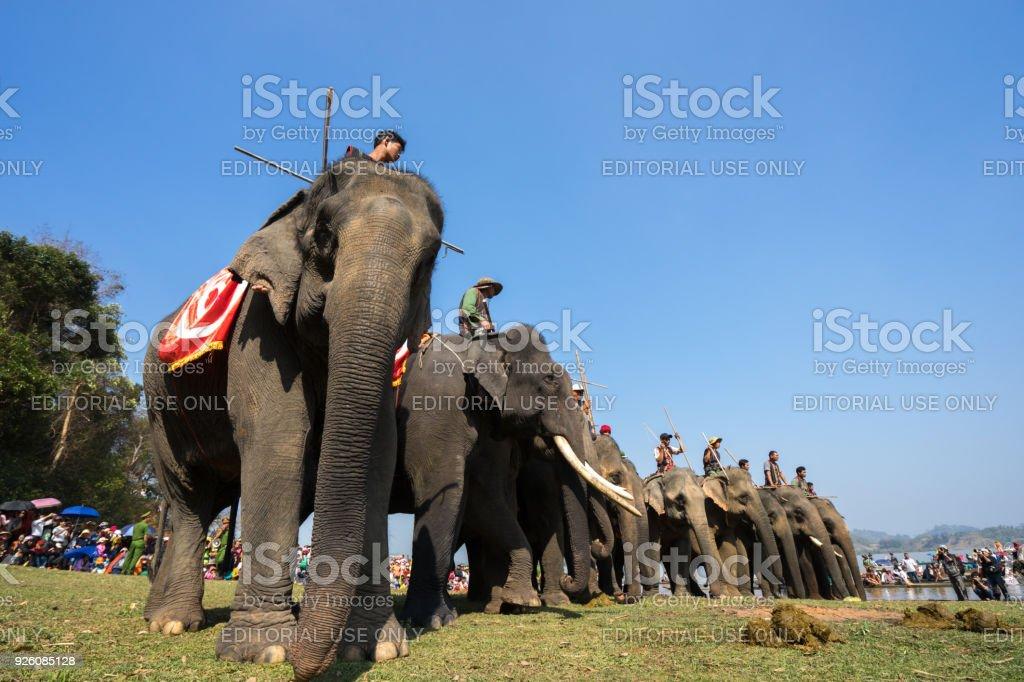 Elefant kön video