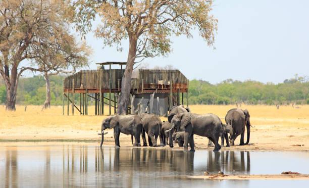 Elefanten stehen an einem Wasserloch mit einem strohgedeckten Baumhaus in der Ferne.  Besucher können eine Nacht unter dem Sternenhimmel verbringen. – Foto