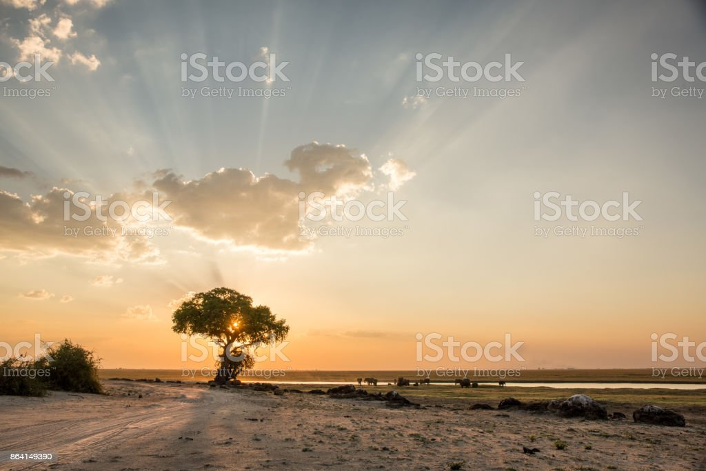 Elephants, sunset at Chobe River, royalty-free stock photo