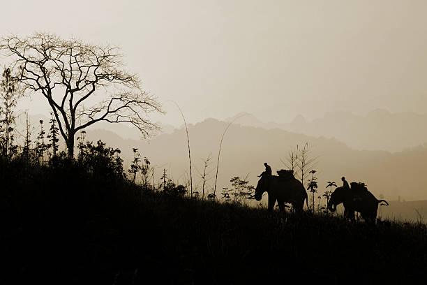 elefanten-trekking - elefanten umriss stock-fotos und bilder