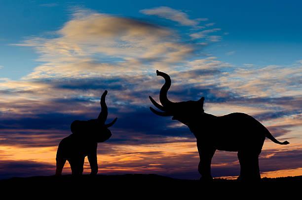 elefanten trumpeting - elefanten umriss stock-fotos und bilder