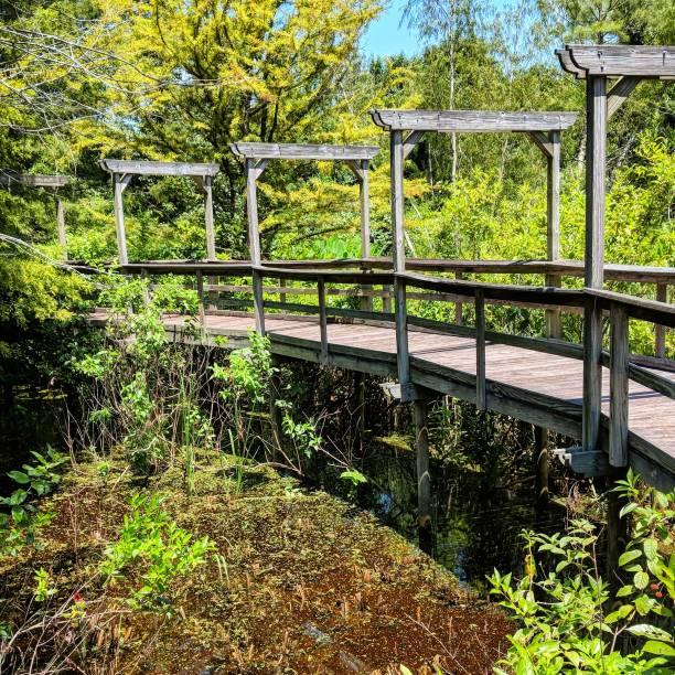 Elevated Boardwalk over Summer Swamp stock photo