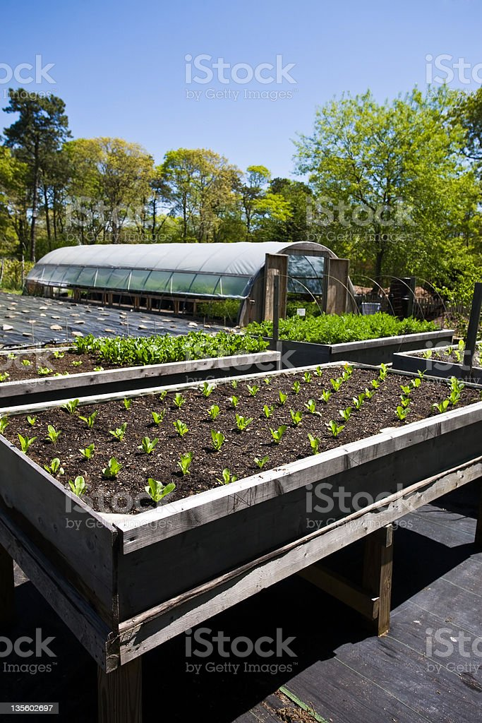 Elevated garden beds and greenhouse royalty-free stock photo