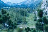 Forest encircles mountain meadow below