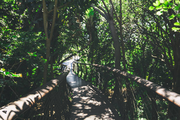 Elevated wooden walkway with a view in Kirstenbosch botanical garden stock photo