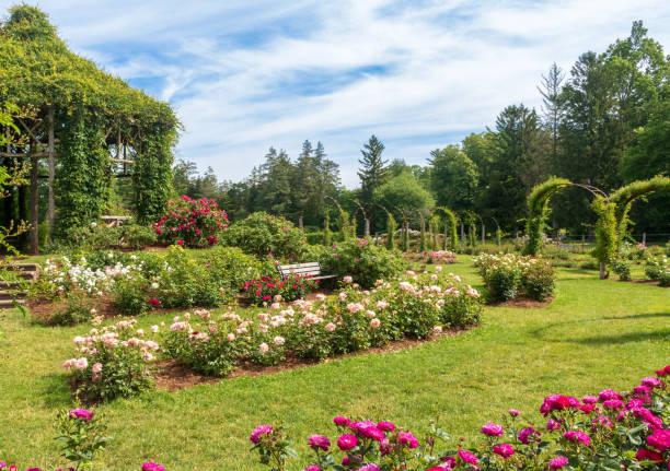 Elizabeth Park rose garden and gazebo stock photo