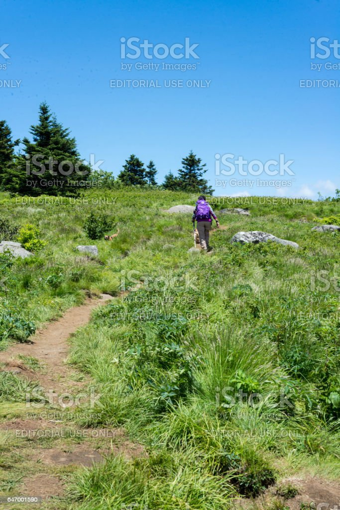 Elizabethton, Tennessee, USA. June 18,2016. A woman with purple daypack walks along a trail with her dog along the Appalachian Trail in Tennessee. stock photo
