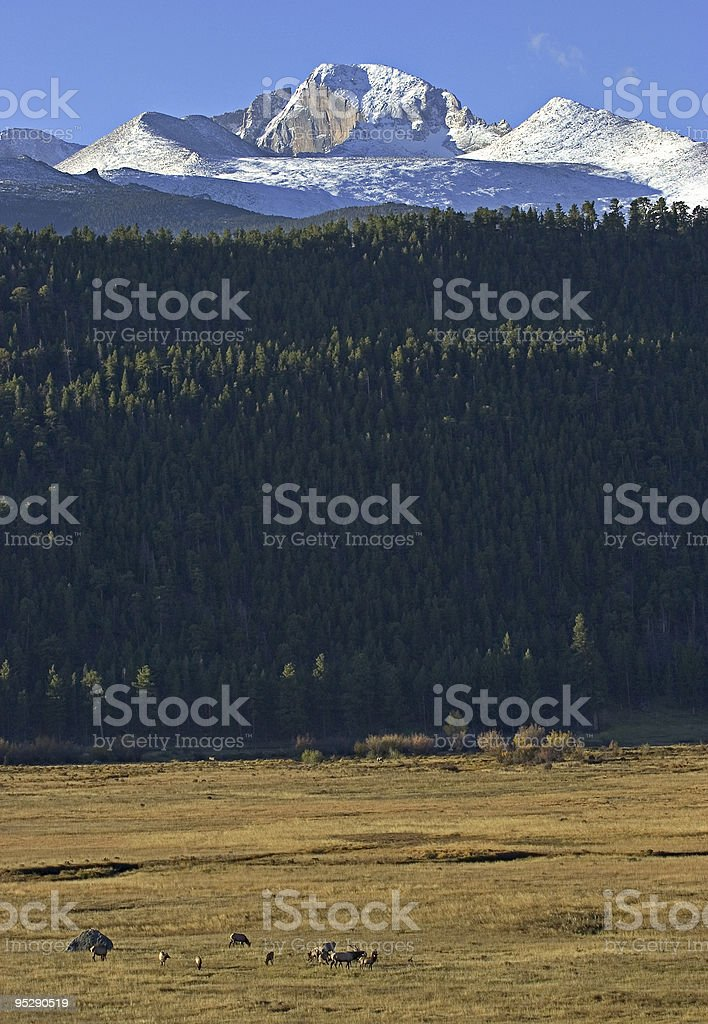 Elk And Longs Peak, Rocky Mountain National Park, Colorado stock photo
