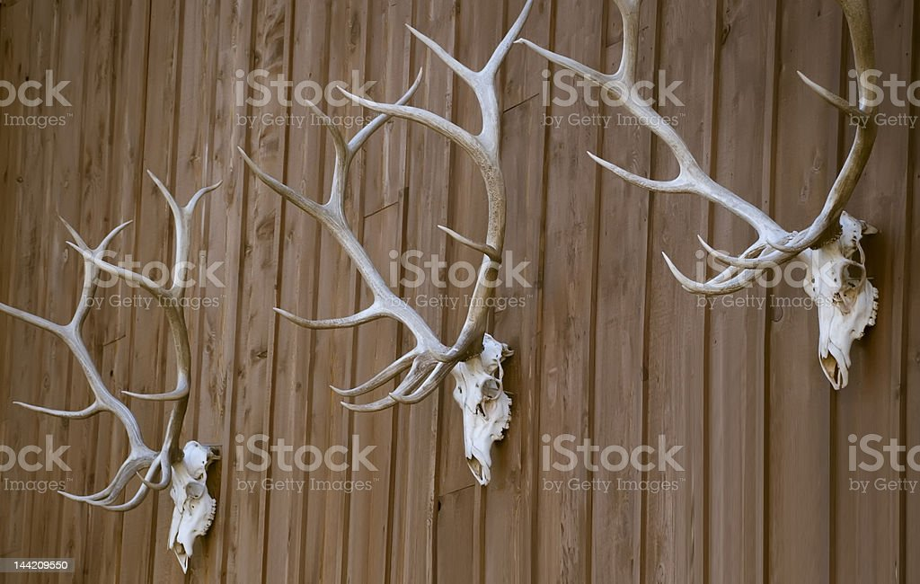 Elk Bones royalty-free stock photo