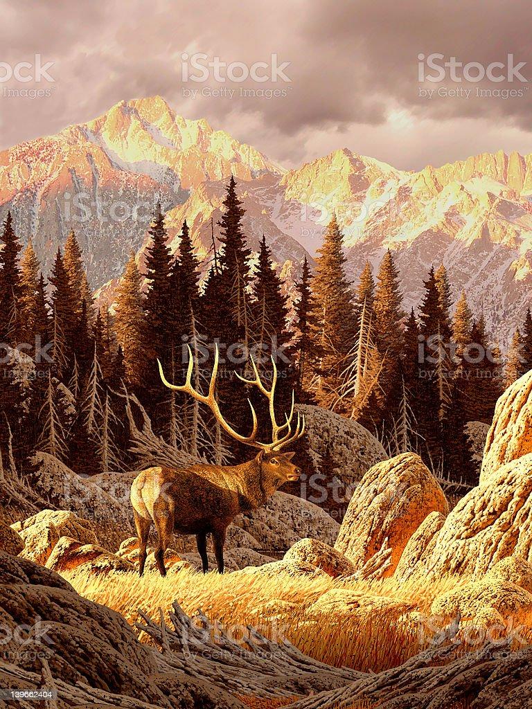 Elk in the Rockies stock photo