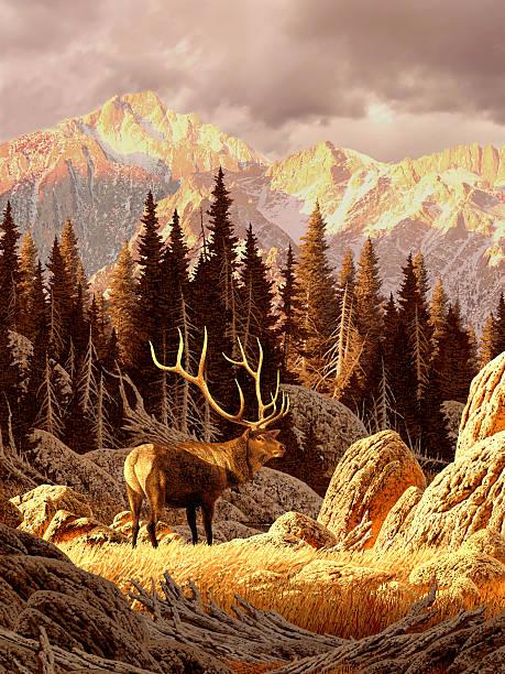 elk in den rocky mountains - waldmalerei stock-fotos und bilder