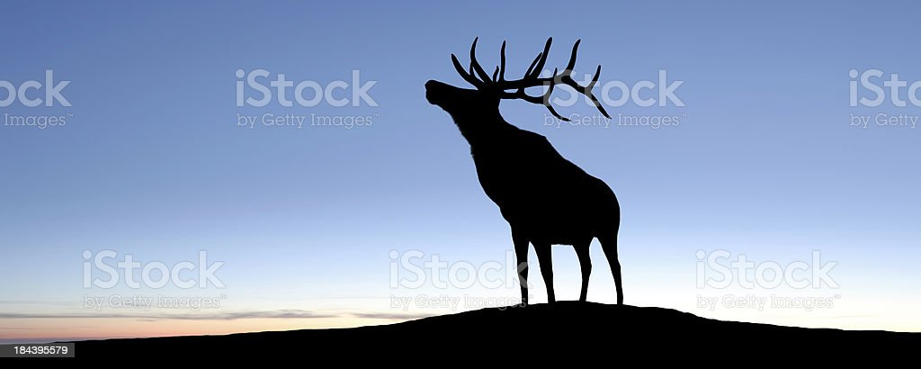 XL elk silhouette stock photo