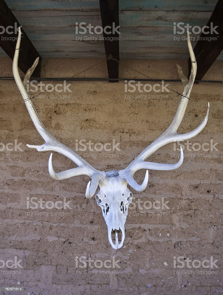 Elk Skull royalty-free stock photo