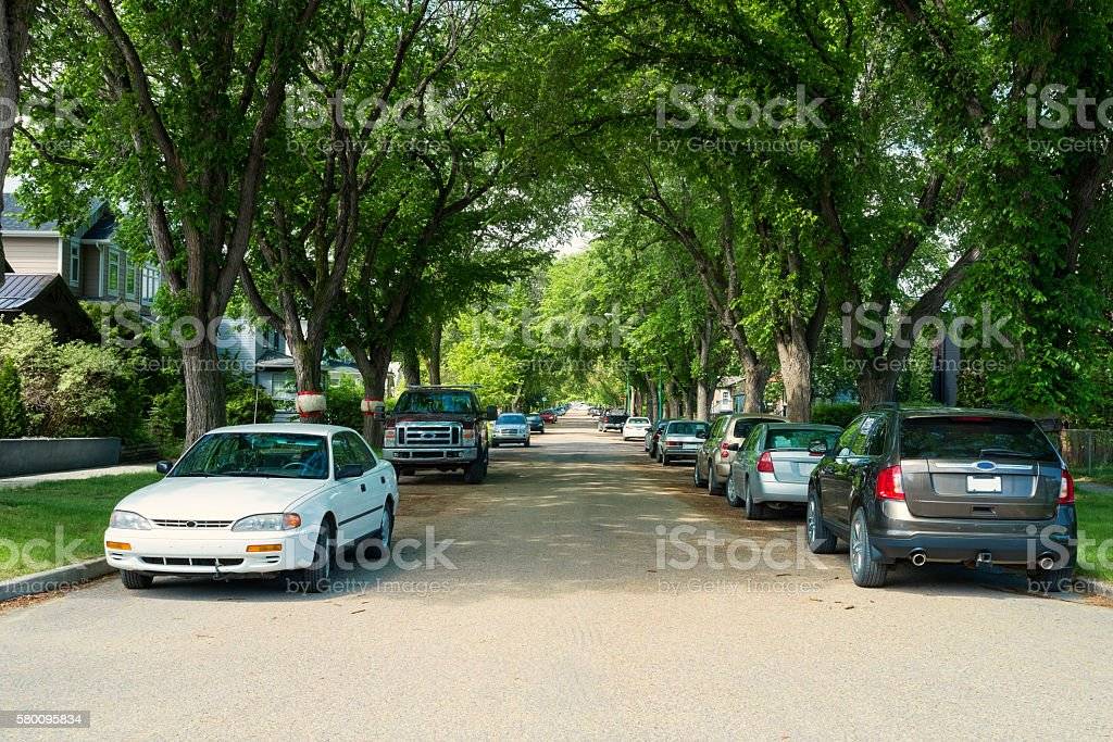 Elm Lined Street in Buena Vista Neighborhood in Saskatoon stock photo