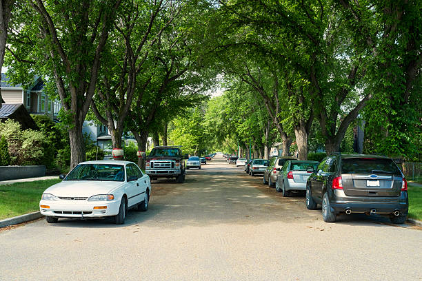 elm lined street in buena vista neighborhood in saskatoon - inmóvil fotografías e imágenes de stock