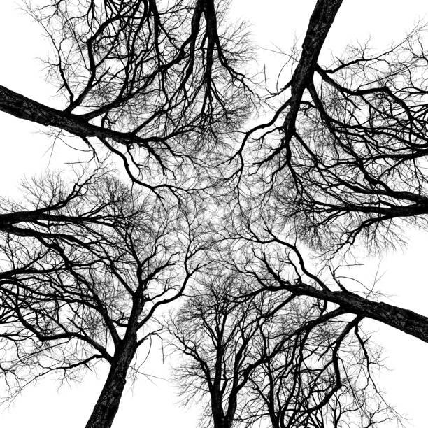 Abstraction d'arbre d'orme - Photo