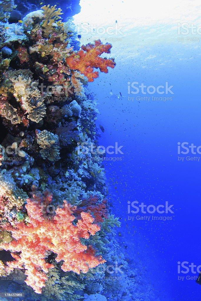 Elphinstone Reef royalty-free stock photo