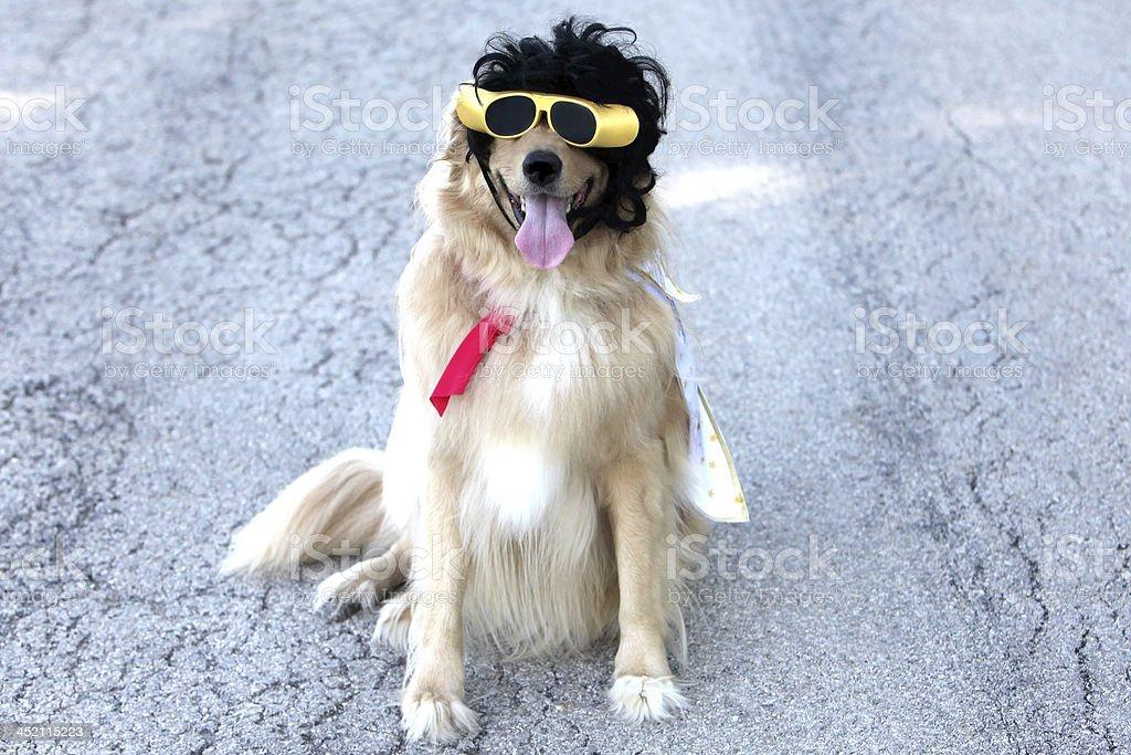 Elvis Dog stock photo