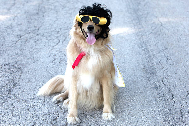 elvis dog - elvis stock photos and pictures