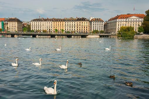 embankment of lake Geneva, Geneva, Switzerland