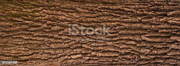 Panoramic photo of the oak texture.