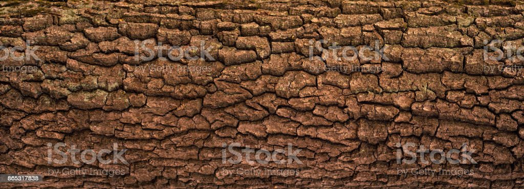 Embossed texture of the bark of oak with green moss. stock photo