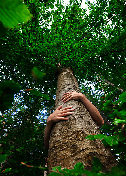 embrace the nature low angle view of unrecognizable man hand embracing a tree, protect nature and environment conceptual photo. tree hugging stock pictures, royalty-free photos & images