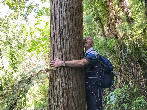 Embracing Nature Senior man hugging a tree in New Zealand native bush tree hugging stock pictures, royalty-free photos & images