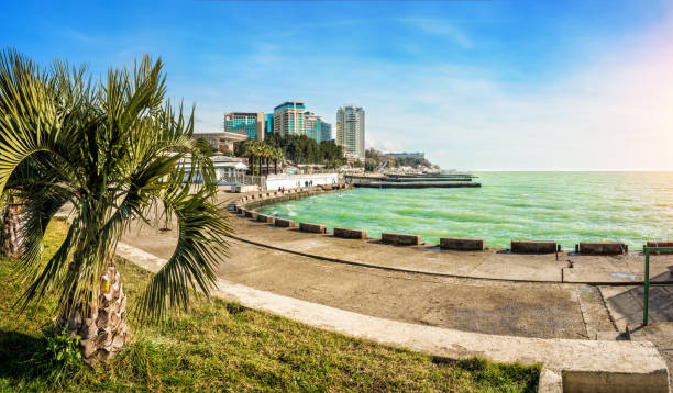 Emerald Black Sea in sunny Sochi Emerald Black Sea in sunny Sochi and a green palm tree on the waterfront sochi stock pictures, royalty-free photos & images