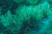 istock Emerald forest background of pine tree branches 1284752127