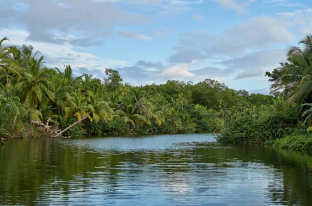 Emerald jungle on the river Rio Diablo stock photo