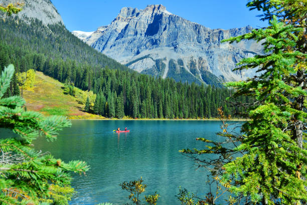 Emerald Lake Emerald Lake,Yoho National Park in Canada emerald lake stock pictures, royalty-free photos & images